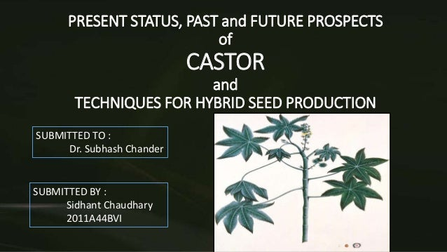PRESENT STATUS, PAST and FUTURE PROSPECTS of CASTOR and TECHNIQUES FOR HYBRID SEED PRODUCTION SUBMITTED TO : Dr. Subhash C...