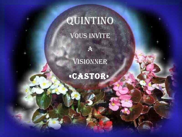 QUINTINO VOUS INVITE A VISIONNER «castor»