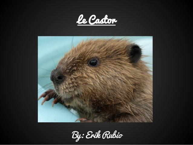 Le CastorBy: Erik Rubio