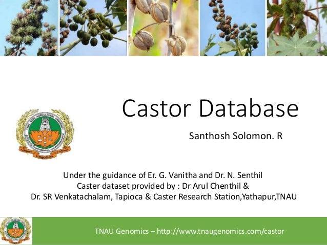 Castor Database Santhosh Solomon. R Under the guidance of Er. G. Vanitha and Dr. N. Senthil Caster dataset provided by : D...
