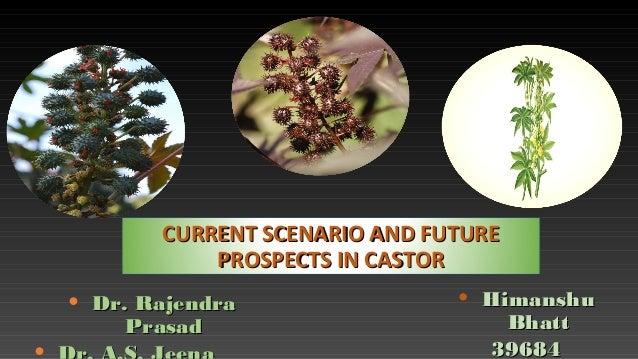 CURRENT SCENARIO AND FUTURECURRENT SCENARIO AND FUTURE PROSPECTS IN CASTORPROSPECTS IN CASTOR • Dr. RajendraDr. Rajendra P...
