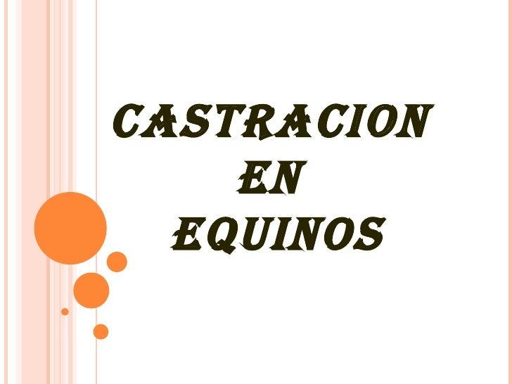 CASTRACION  EN  EQUINOS