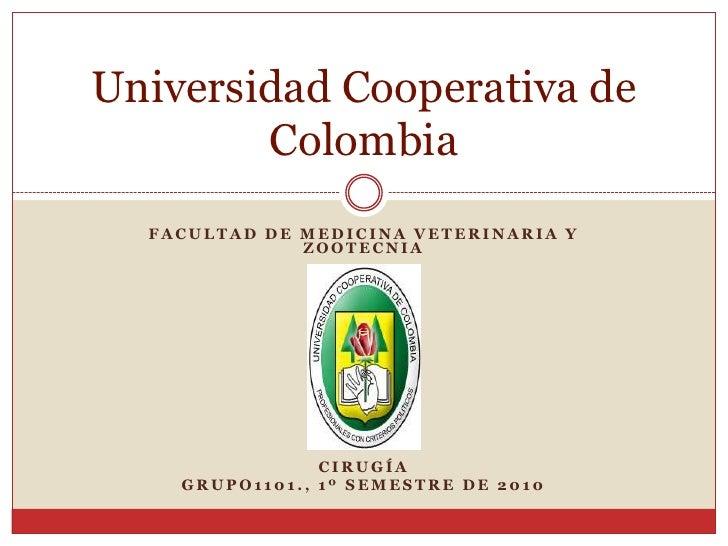 FACULTAD DE MEDICINA VETERINARIA Y ZOOTECNIA<br />cirugía<br />Grupo1101., 1º Semestre de 2010<br />Universidad Cooperativ...