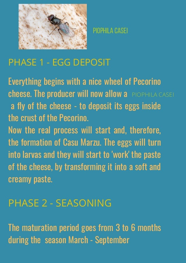 Everything begins with a nice wheel of Pecorino cheese. The producer will now allow a � a fly of the cheese - to deposit i...