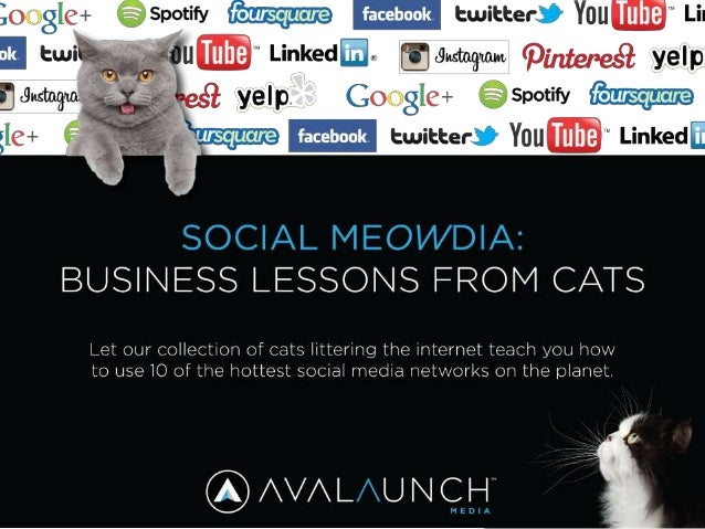 Social MeOWdia: Business Lessons Learned from Cats