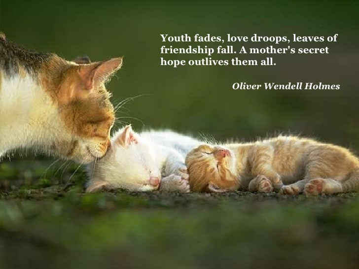 Quotes About Cats And Friendship Youth fades, lo...
