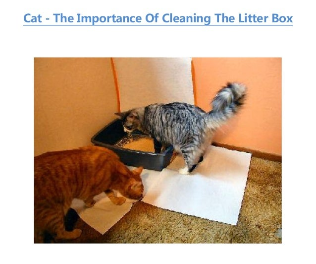 Cat - The Importance Of Cleaning The Litter Box ...  sc 1 st  SlideShare & Cat - the importance of cleaning the litter box Aboutintivar.Com
