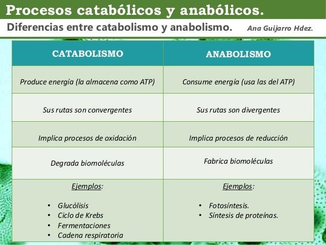 ejemplos de anabolico y catabolico