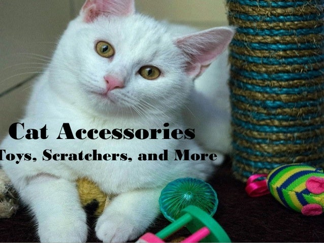 Cat Accessories Toys, Scratchers, and More