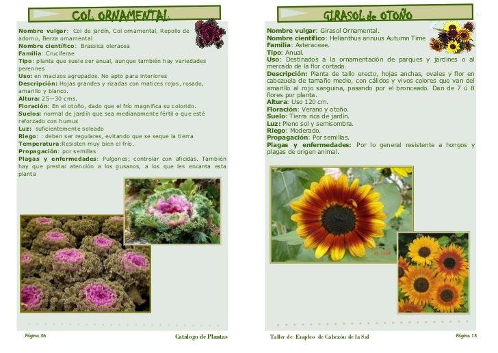 Catalogo plantas for Cuales son las plantas decorativas