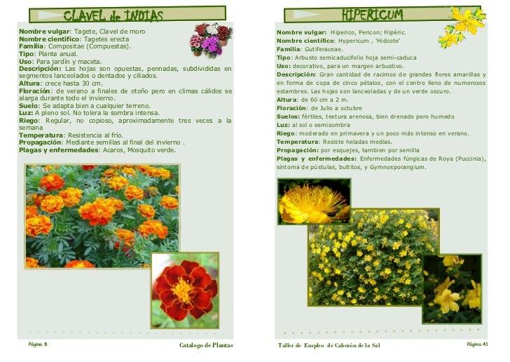 Plantas de jardin y sus nombres dise os arquitect nicos - Nombres de plantas de jardin ...