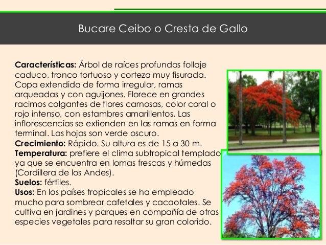 Catalogo de especies y mobiliario - Ceibo mobiliario ...