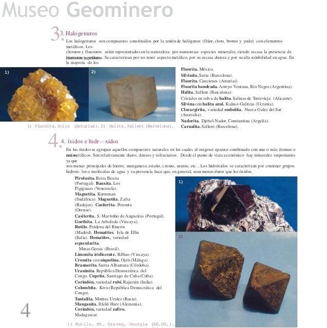 Catalogo De Fosiles