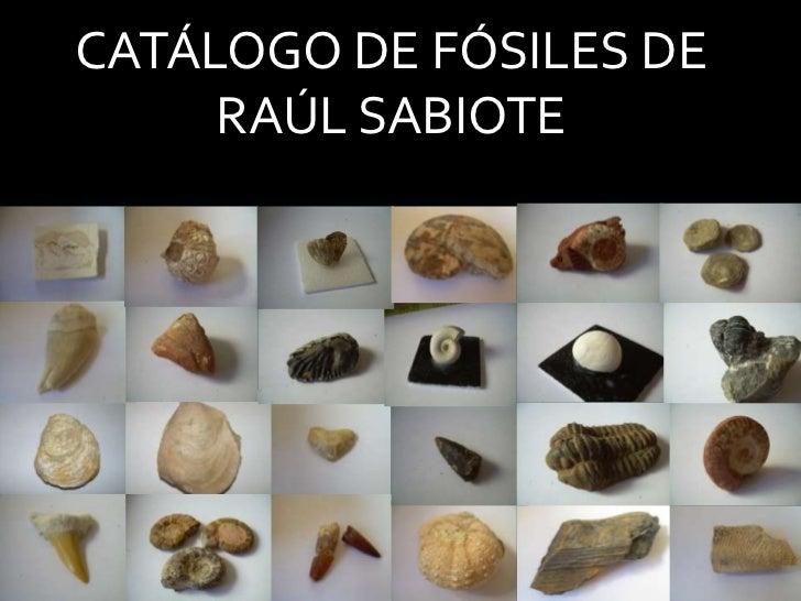 CATÁLOGO DE FÓSILES DE RAÚL SABIOTE<br />