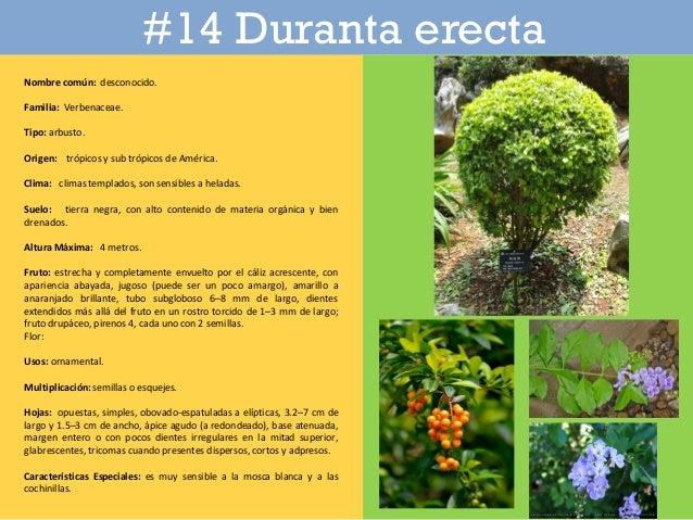 Catalogo de plantas en parque iberoamericano for Plantas ornamentales para parques