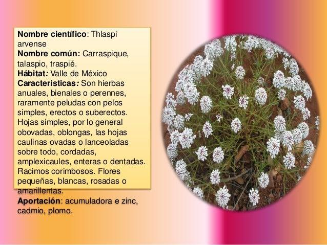 Catalogo de plantas fitorremediadoras - Clases de flores y sus nombres ...