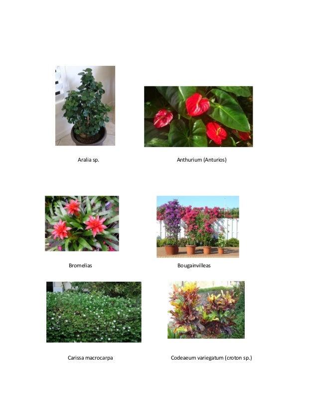 Catalogo de plantas ornamentales y agroquimicos for Concepto de plantas ornamentales