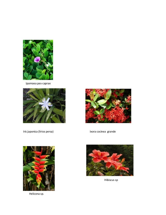 catalogo de plantas ornamentales y agroquimicos