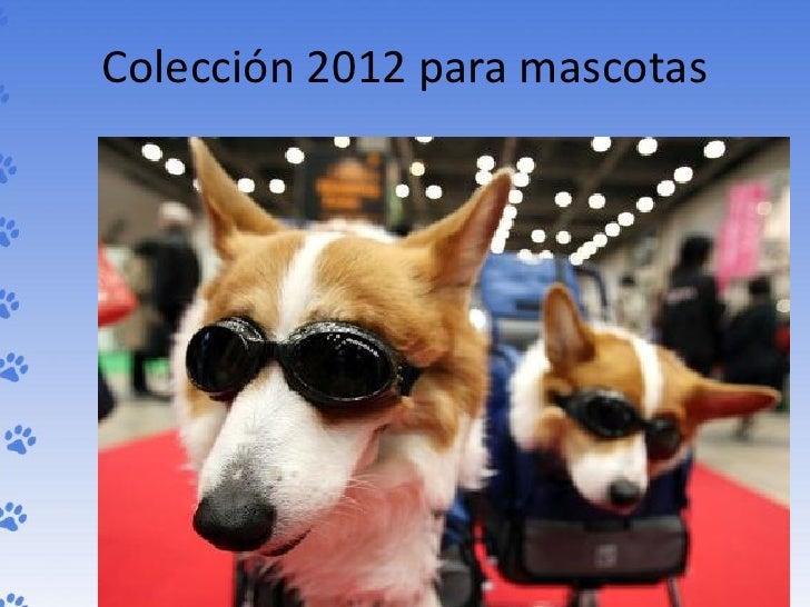 Colección 2012 para mascotas