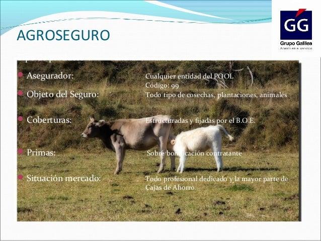 Productos especiales grupo galilea - Caser grupo asegurador ...