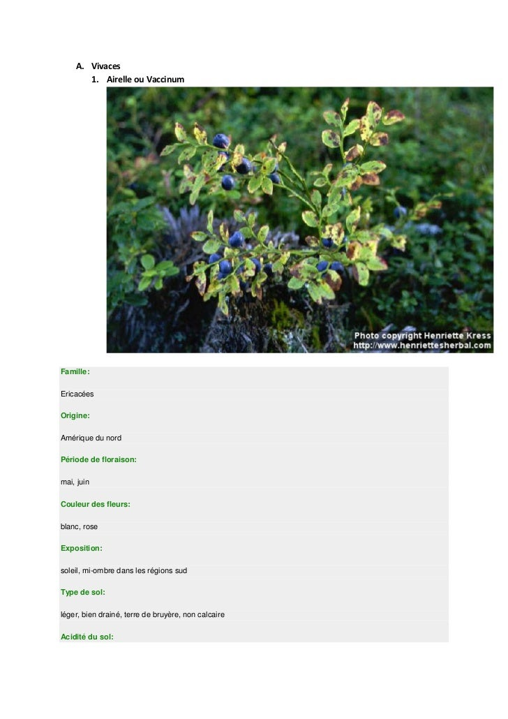 A. Vivaces       1. Airelle ou VaccinumFamille:EricacéesOrigine:Amérique du nordPériode de floraison:mai, juinCouleur des ...