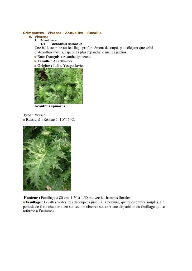 Grimpantes - Vivaces - Annuelles – Rocaille   A. Vivaces       1. Acanthe –          1.1.  Acanthus spinosus       Une bel...