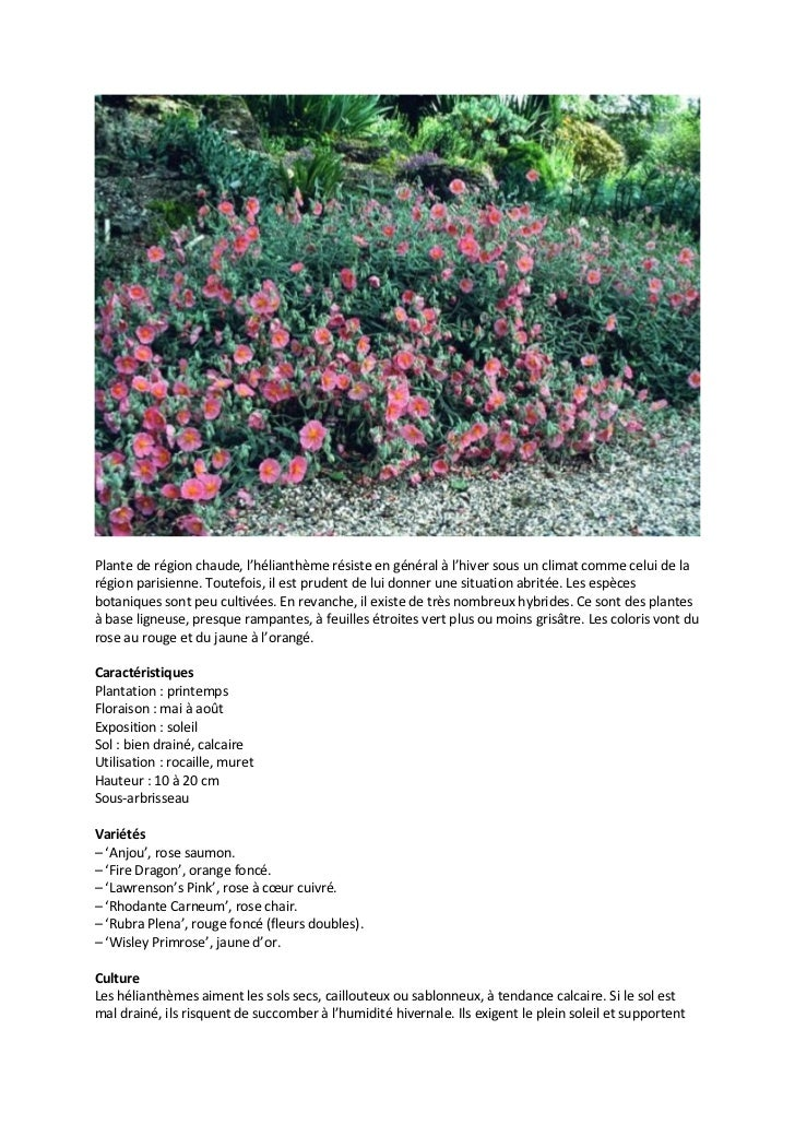 Catalogue plantes sol alcalin mur vegetal - Initiatives fleurs et jardins catalogue ...