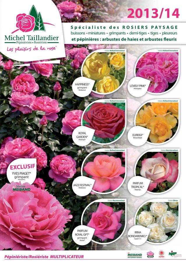 ROSIERS BUISSONS A GRANDES FLEURS CONDITIONNEMENT  RN : rosier en racines nues greffé sans chromo Poch. : rosier en pochet...