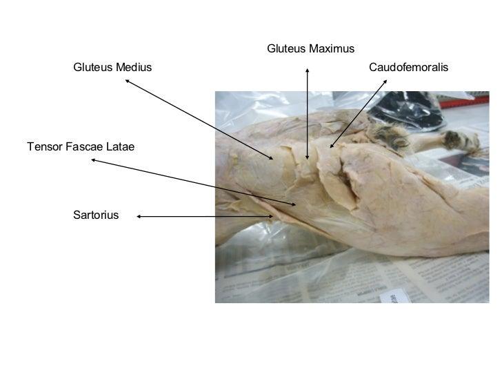Cat anatomy