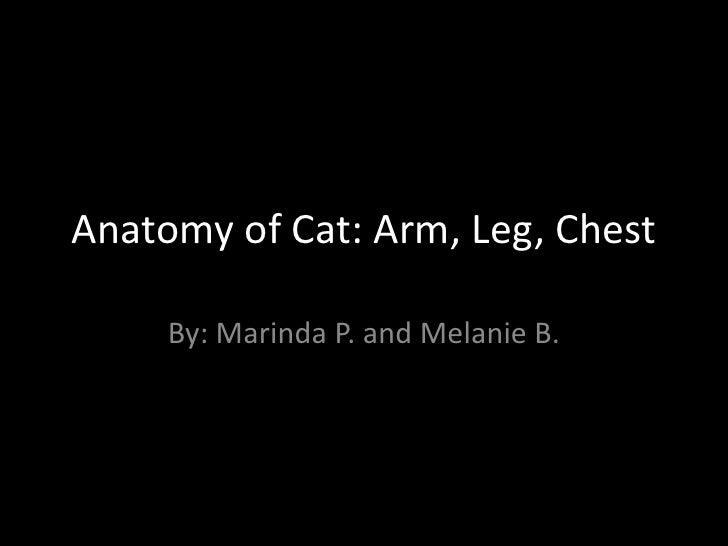 Anatomy of Cat: Arm, Leg, Chest     By: Marinda P. and Melanie B.