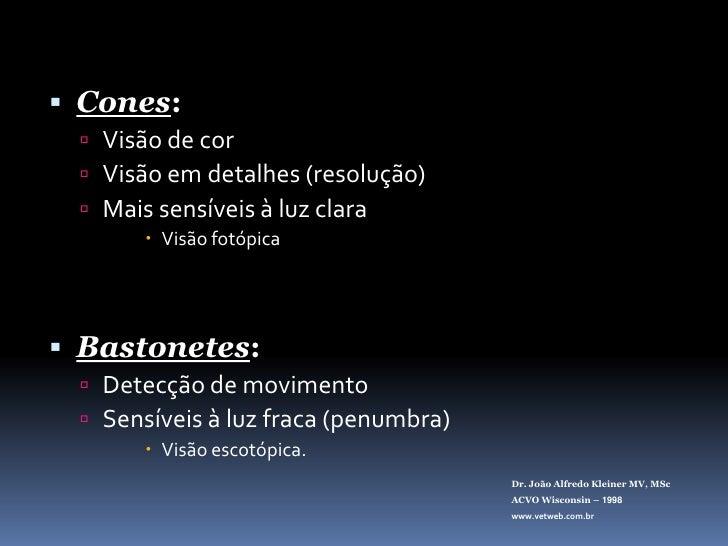Cones:<br />Visão de cor<br />Visão em detalhes (resolução)<br />Mais sensíveis à luz clara<br />Visão fotópica<br />Basto...