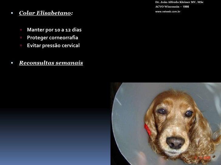 Pré-op Poodle<br />Dr. João Alfredo Kleiner MV, MSc<br />ACVO Wisconsin – 1998<br />www.vetweb.com.br<br />
