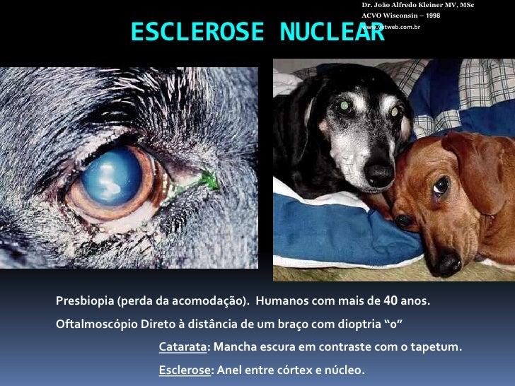 ESCLEROSENUCLEAR<br />Dr. João Alfredo Kleiner MV, MSc<br />ACVO Wisconsin – 1998<br />www.vetweb.com.br<br />Presbiopia (...