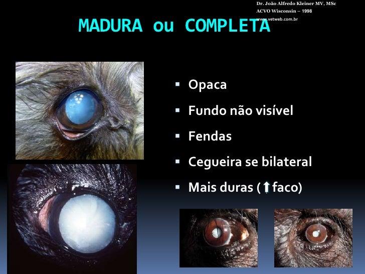 Dr. João Alfredo Kleiner MV, MSc<br />ACVO Wisconsin – 1998<br />www.vetweb.com.br<br />MADURA ou COMPLETA<br />Opaca<br /...