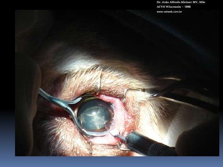 Dr. João Alfredo Kleiner MV, MSc<br />ACVO Wisconsin – 1998<br />www.vetweb.com.br<br />Menor incidência de complicações p...