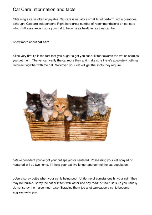 Cat Care Information and facts Obtaining a cat is often enjoyable. Cat care is usually a small bit of perform, not a great...