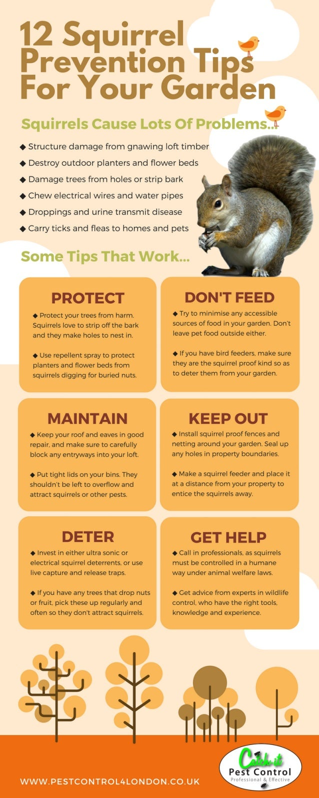 catch-it-squirrel-pest-control-infograph