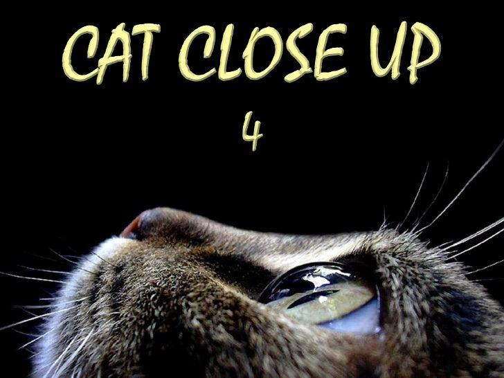 http://judy-cats.blogspot.com   http://fauna-flora.gportal.hu