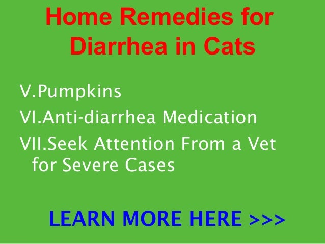 Bland Food For Cats With Diarrhea
