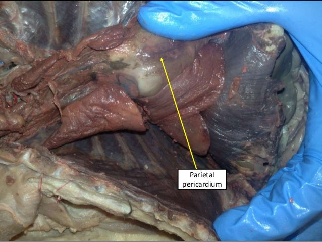 Cat digestive system ee and tw