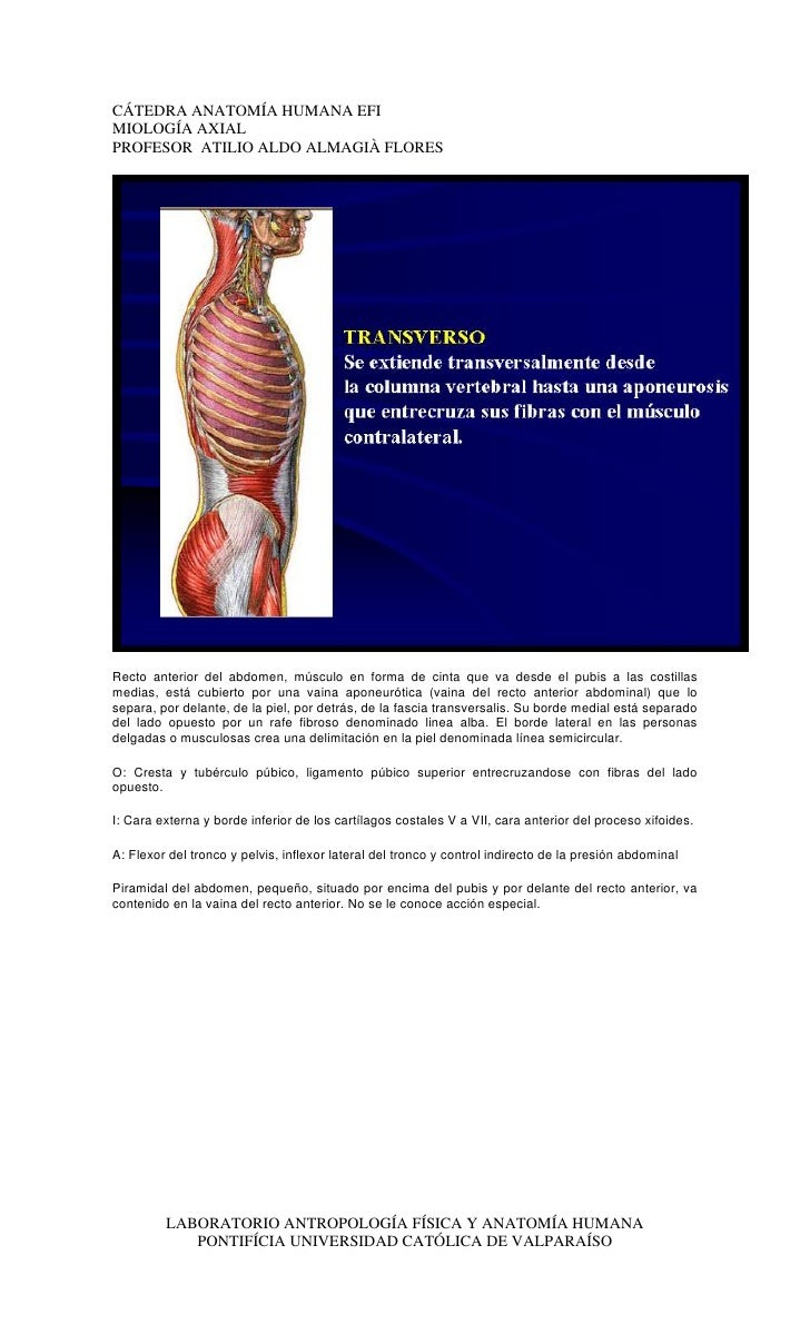 Asombroso Anatomía Bromea Trazadores De Líneas Uno Foto - Anatomía ...