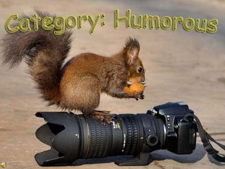 Category, humorous (v.m.) Slide 1