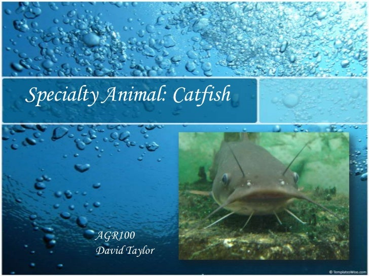 Specialty Animal: Catfish<br />AGR100<br />David Taylor<br />