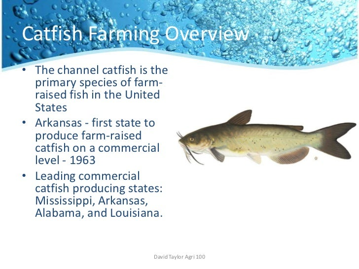 Catfish Farming | Catfish Farming
