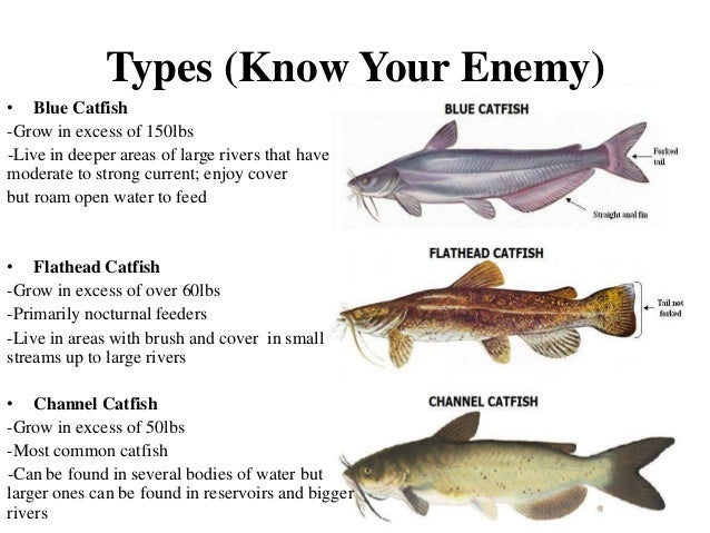 Catfishing for Best time to fish for catfish