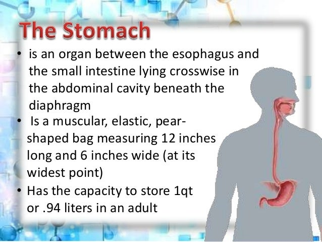 a part of digestive system- the stomach: parts,functions,condition a…, Human Body