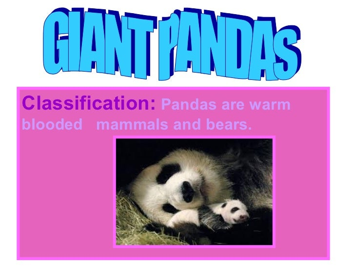 Classification: Pandas are warmblooded mammals and bears.