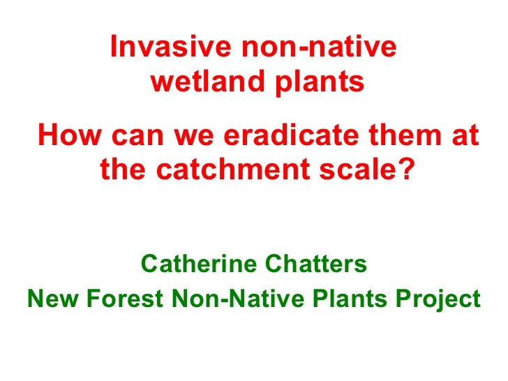 Invasive non-native  wetland plants How can we eradicate them at the catchment scale? Catherine Chatters New Forest Non-Na...