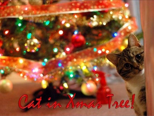 http://judy-christmas.blogspot.com http://www-ppsparadicsom.net