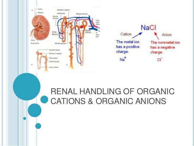 RENAL HANDLING OF ORGANIC CATIONS & ORGANIC ANIONS